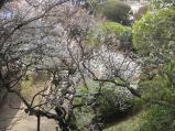 2011/3/30 偕楽園内(外から)1
