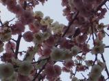 2011/4/3 常磐高速道路下2