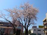 2011/4/8 多賀駅前2 2011/5/6掲載
