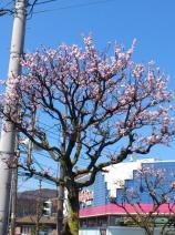 2011/4/8 多賀駅前1 2011/5/6掲載