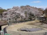 2011/4/20 かみね動物園2 2011/5/6掲載