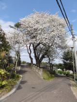 2011/4/20 かみね動物園1 2011/5/6掲載