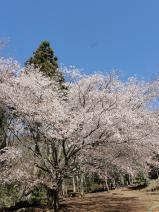 2011/4/24 小木津山自然公園 2011/5/6掲載