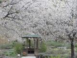 2011/4/22 ひたち海浜公園4 2011/5/6掲載
