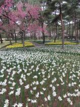 2011/4/22 ひたち海浜公園5 2011/5/6掲載