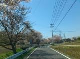 2011/4/12 双葉台付近2 2011/5/6掲載