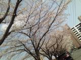 2011/4/10 水戸駅南 河川敷 2011/5/6掲載