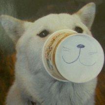 カミコップ犬