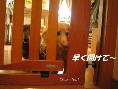 開けてジュニ