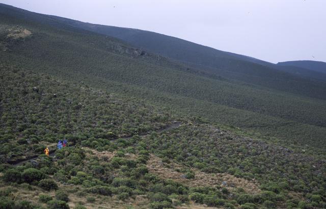 kilimanjaro0128_convert_20140927071747.jpg