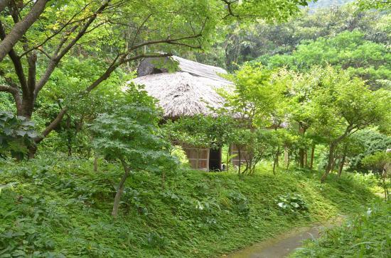 泉津 Sさんの庭園内