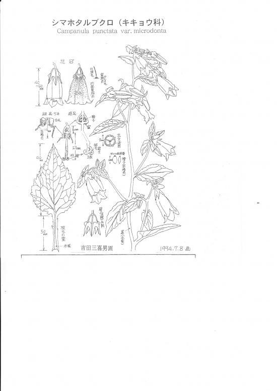吉田三喜男画  1994.7.8画