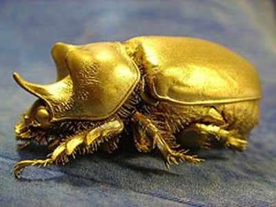 gold-bug.jpg