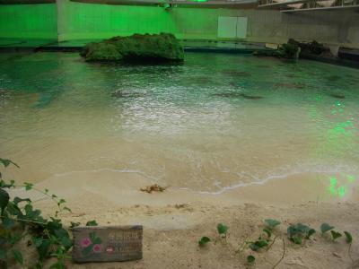 トロピカル砂浜