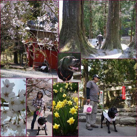 4-18 053 みたけの桜2
