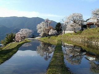 みたけの桜