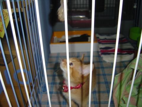 2ヶ月ののジョゼフィン嬢(2007.08.27)
