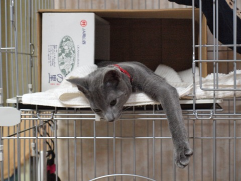 アレくんヒストリー03(2010.03.09)
