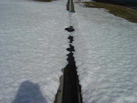 排水溝にも春(2010.04.02)