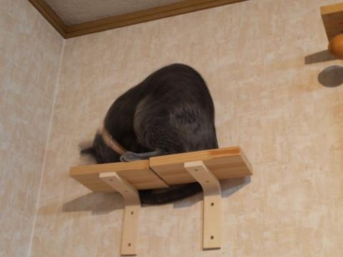 アレク、しっぽを追う02(2010.04.02)