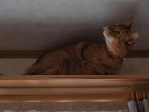 気になるなのよっ02(2010.04.07)