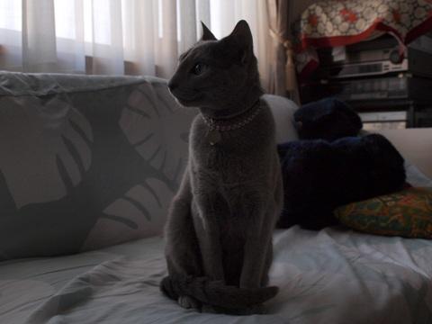 おすましニコ01(2010.04.07)