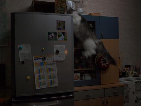 がんばれフレイヤ♪04(2010.04.21)