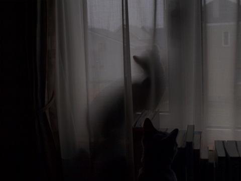 雨が気になる銀ブラ(2010.04.29)