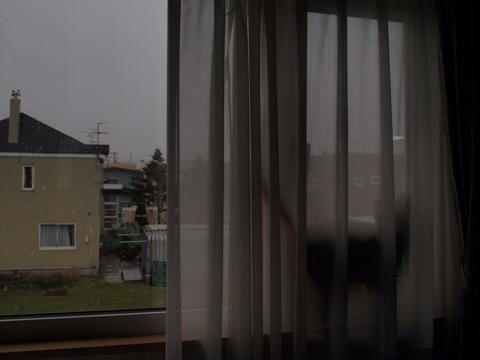 雨が気になるジョゼフィン(2010.04.29)