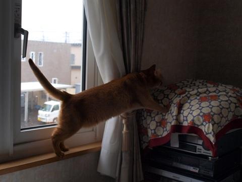 休むなのよっ(2010.04.29)