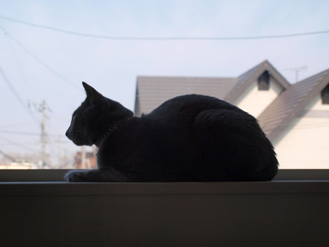 「ニコライの窓」の銀ブラ02(2010.05.03)