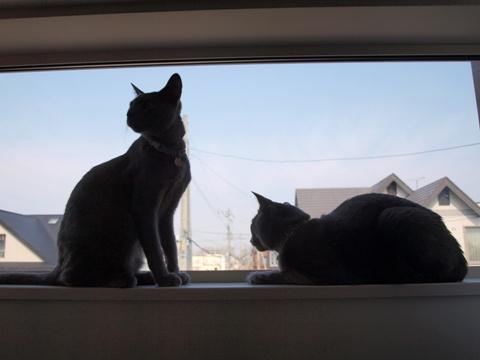 「ニコライの窓」の銀ブラ03(2010.05.03)