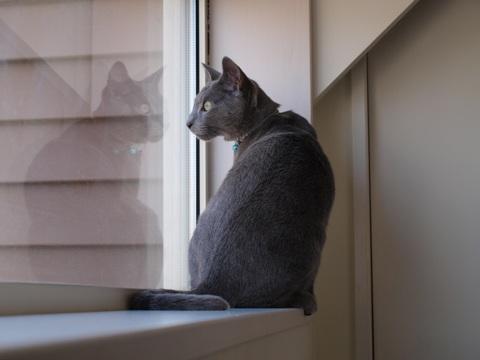 続「ニコライの窓」の銀ブラ11(2010.05.03)