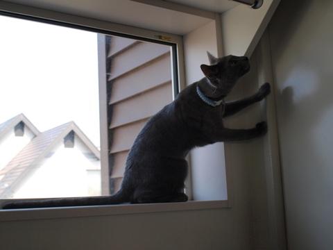 続「ニコライの窓」の銀ブラ12(2010.05.03)