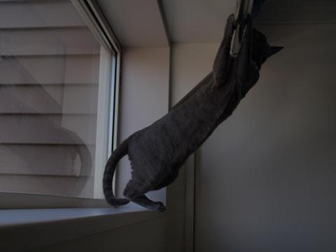続「ニコライの窓」の銀ブラ13(2010.05.03)