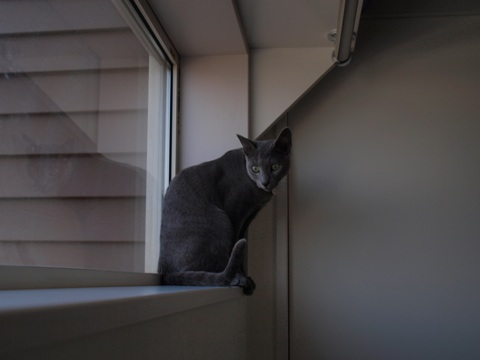 続「ニコライの窓」の銀ブラ14(2010.05.03)