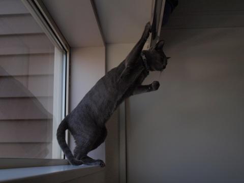 続「ニコライの窓」の銀ブラ15(2010.05.03)