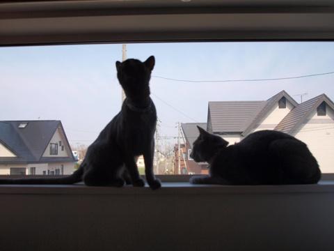 続「ニコライの窓」の銀ブラ01(2010.05.03)