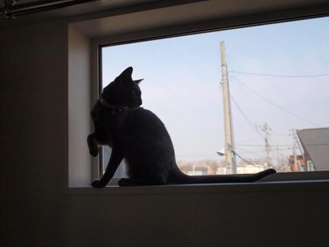 続「ニコライの窓」の銀ブラ02(2010.05.03)