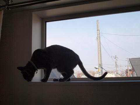 続「ニコライの窓」の銀ブラ03(2010.05.03)