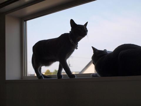 続「ニコライの窓」の銀ブラ04(2010.05.03)
