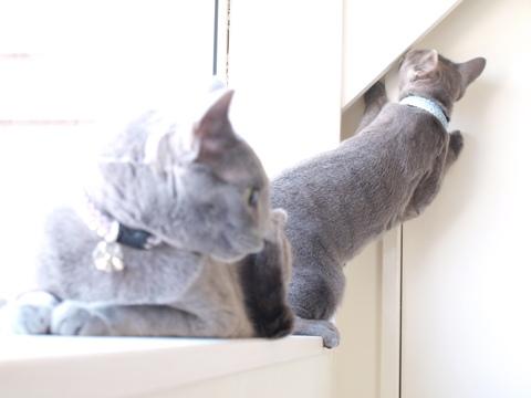 続「ニコライの窓」の銀ブラ09(2010.05.03)