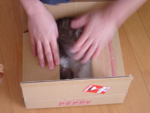箱詰めフレイヤちゃん02(2010.05.03)