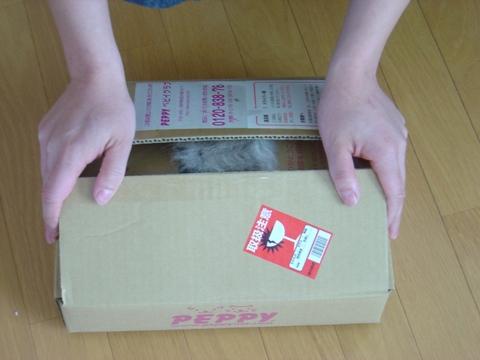 箱詰めフレイヤちゃん03(2010.05.03)