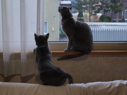 窓辺の銀ブラ(2010.05.08)