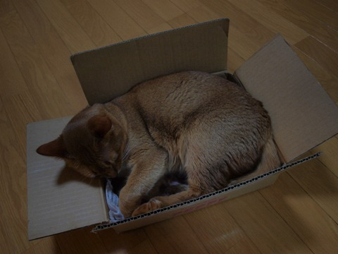 箱ジョゼ(2010.05.11)