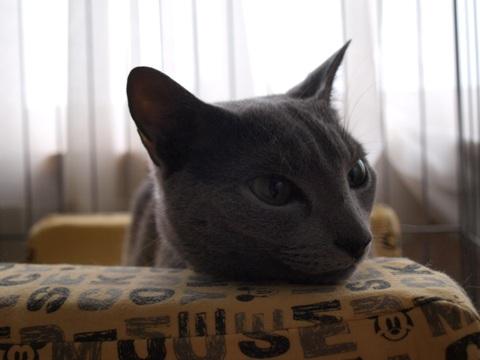 3歳の記念写真(2010.05.12)