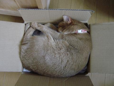 箱ジョゼ(2010.05.13)