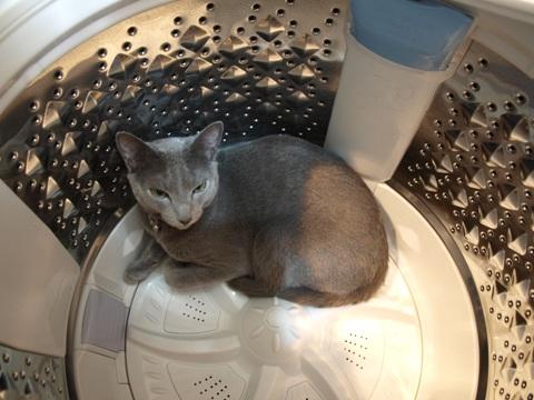 洗濯機ニコライ(2010.05.19)