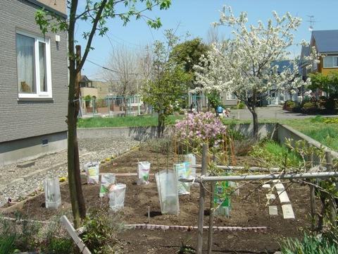 お庭(2010.05.22)